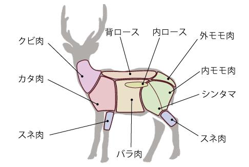 鹿肉部位解説