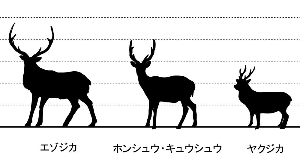 ニホンジカの比較