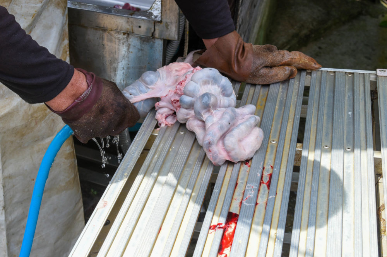 大腸内の糞を洗い流す
