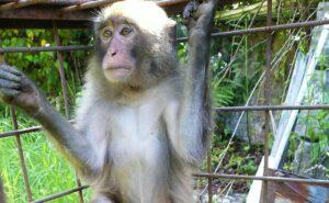 檻に入った猿